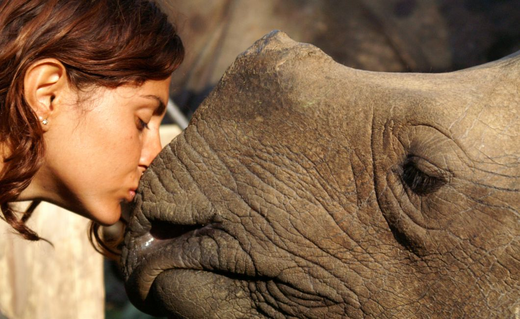 Wildes close up with a rhino